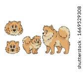 cute cartoon pomeranian dog and ...   Shutterstock .eps vector #1669529308
