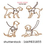 Guide Dogs With Harness....