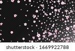 Nice Sakura Blossom Isolated...