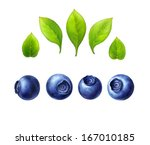 blueberry set  leaves and... | Shutterstock . vector #167010185