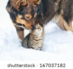 Stock photo dog and cat playing together outdoor in the snow 167037182