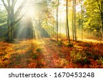 Colourful Autumn Forest Trees...