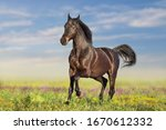 Bay Horse Run Fast On Flowers...
