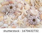Sea Urchins  Starfishes And...