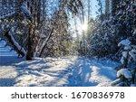 Winter Snow Forest Sunset Lights