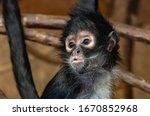 Close Up Of Small Monkey