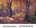 Autumn Forest Nature. Vivid...