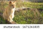 Cute Ginger Cat Sitting In A...