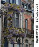 Purple Flowering Vine  Around...