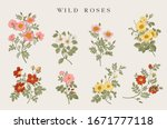 Wild Roses. Yellow  Red  Pink ...