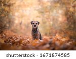 Autumn Dog Portrait Border...