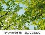 Spring Landscape Of Trees...
