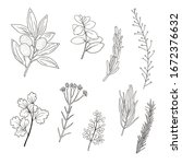 set of hand drawn plant...   Shutterstock . vector #1672376632