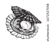 scallop  open shell with clam....   Shutterstock .eps vector #1672527058