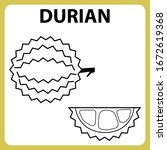 coloring book durian fruit...   Shutterstock .eps vector #1672619368