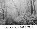 winter forest | Shutterstock . vector #167267216