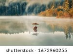 Bonsai Tree Fairy Lake  At Por...