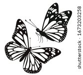 Set Of Two Butterflies Isolate...