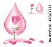 Stock vector a pink rose and rose oil dripping of rose essential oil file contains transparencies and 167379386