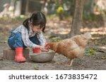 Little Asian Girl Feeding Hen...
