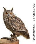 Small photo of Eagle owl on a tree trunk isolated at a white background