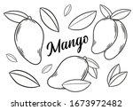 mango set. hand drawn mango ... | Shutterstock .eps vector #1673972482