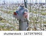 Frozen Fireplug In Lower Austria