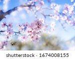 Spring Blossom Background....