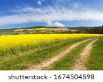 Field Of Rapeseed  Canola Or...