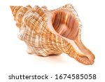 Focus Stacking Of A Sea Shell...