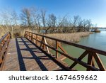 Floating Swamp Trail In...