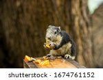 Squirrel Sits On The Wood And...