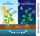 photosynthesis and cellular... | Shutterstock .eps vector #1675069912