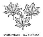 maple leaves set sketch... | Shutterstock .eps vector #1675194355