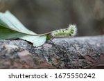 fluffy caterpillar crawling on... | Shutterstock . vector #1675550242
