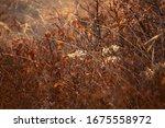 dry plants back light sun set... | Shutterstock . vector #1675558972