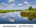 The Nature Reserve 'zuidpolder' ...