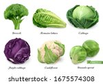 cabbages and lettuce  leaf... | Shutterstock .eps vector #1675574308