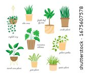 cute home plants vector... | Shutterstock .eps vector #1675607578