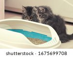 Small photo of Two cute kittens are sitting near their litter box. Training kittens to the toilet