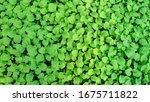 growing seedlings of farmers to ...   Shutterstock . vector #1675711822