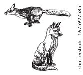 black and white image of foxes | Shutterstock .eps vector #1675927585