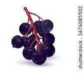 bunch of sambucus  elderberry... | Shutterstock .eps vector #1676085502