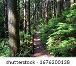 Trail With Cedar And Fern