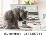 Small photo of Cat sitting on the table at working place with IT equipment at home and washing. Woman in home clothing working on computer before monitor at homishness atmosphere. Flexible hours and remote working.