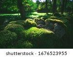 Flowerless Green Mosses On...