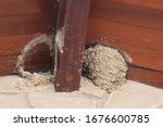 Swallow's Nest Made Under A...