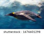 Penguin Diving Under Ice ...