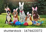 A Group Of Dogs With Bunny Ears ...