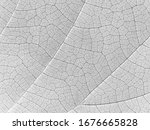 abstract white leaf texture ...   Shutterstock . vector #1676665828